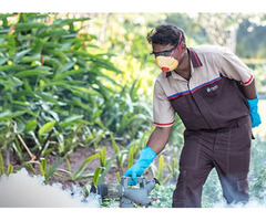 Call Pest Management Services In St. Lucie To Protect Your Home