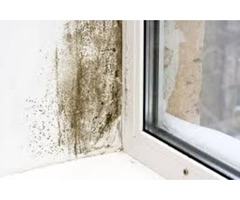 Mold mitigation, mold testing service of Fort Collins Colorado