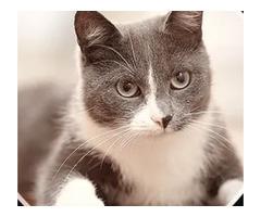 Best Pet Pain Management | Westtoledoanimalhospital.com