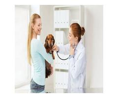 Expert Veterinarian Pharmacy Services | Westtoledoanimalhospital.com