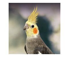 best parakeet food