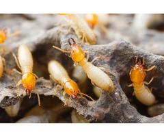Quality Termite Control Service in Hampden