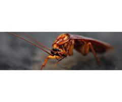 Effective Cockroach Control Service in Colorado Springs, CO.