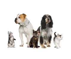 Affordable Pet Care Tips – VIP Pet Care As Insanely Useful
