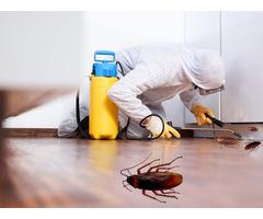 Cockroach Control service in Bradenton