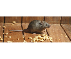 Number One Rodent Control Service in Colorado Springs