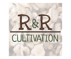 R&R Cultivation is Adding More Mushroom Varieties