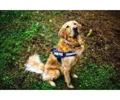 Affordable Dog Harness in Round Rock