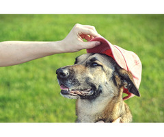 Certified Dog Trainer Terry Cook in Columbus Ohio