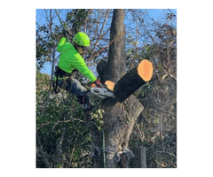 Hire ISA Certified Arborists Connecting Connor Tree Service