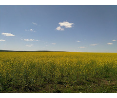 Land for sale in Russia