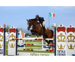 Get the best Horse Show Jumping Experience with Comly Sport Horses!