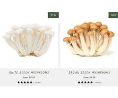 How Mushrooms Help Our Forests | R&R Cultivation