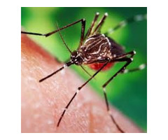 Mosquitoes and Ticks Spray in Salisbury