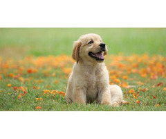 Best Dog Daycare Services in McLean Virginia