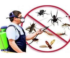Best Termite Control Service in Hampden