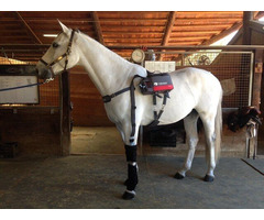 Cold Compression Therapy Equine