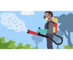 Home Mosquito Control service in Bradenton