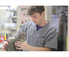 Best Veterinary Surgical Services in McLean VA