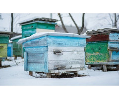 How to winterize your Beehive?