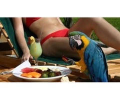 Costa Rica Bird Watching Tours