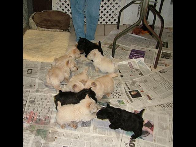 cat pet shops in hyderabad