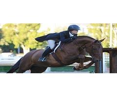 Horse Training Schools in California