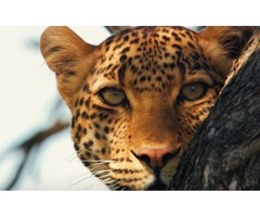Enjoy Amazing Tanzania Wildlife With Tanzania Travel Guide