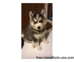 husky puppys, all have blue eyes, sold, taking name