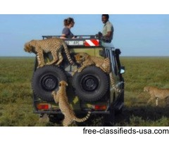Enjoy The Adventurous Wildlife Safari At African Safari