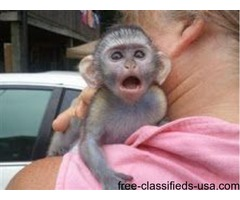 Sweet Monkeys