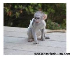 babies marmoset monkeys
