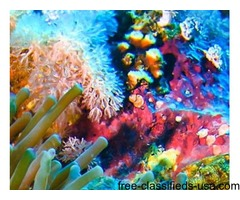 Diving Vanuatu, Best Dive Spots Santo