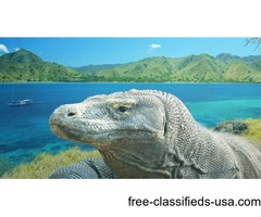 3 Days Komodo Tour