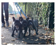 Fhss Frenches for sale