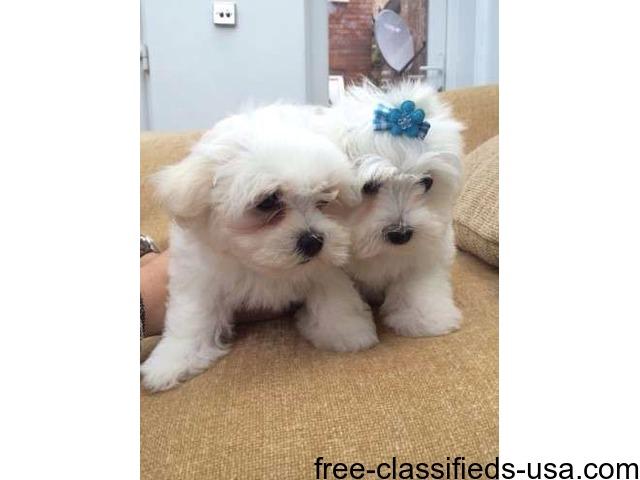 free puppies flint michigan
