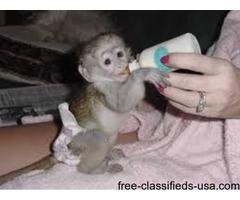 monkys for adoption