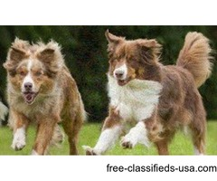Pet Health Nutritional Supplements & Products to Detoxify