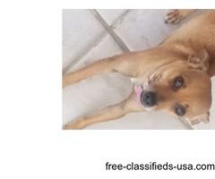 Free loving dog to a loving home