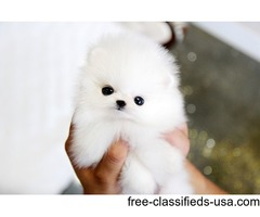 Beautiful Micro Poms Available