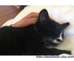 Rory: Female tuxedo cat