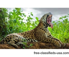 Exhilarating wildlife photography tours