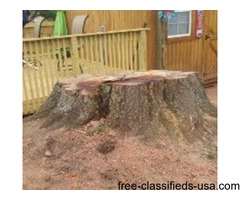A1 Stump Grinding and Removal
