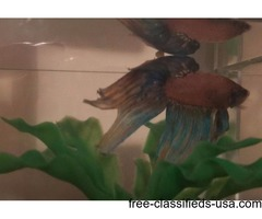 OBO BETTAS AND SUPPLIES!