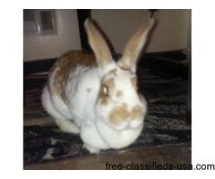 Lynns Rescue Bunnies/Rabbits