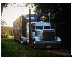 379 Peterbilt Show Truck/Work Truck