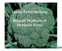 Broccoli, Waltham 29 Heirloom Seeds, Order now, FREE shipping