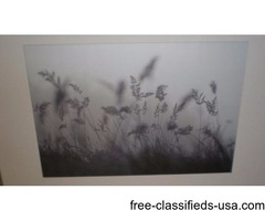 IKEA Floral Picture with Silver Frame