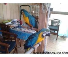 different specieas of parrots for sale