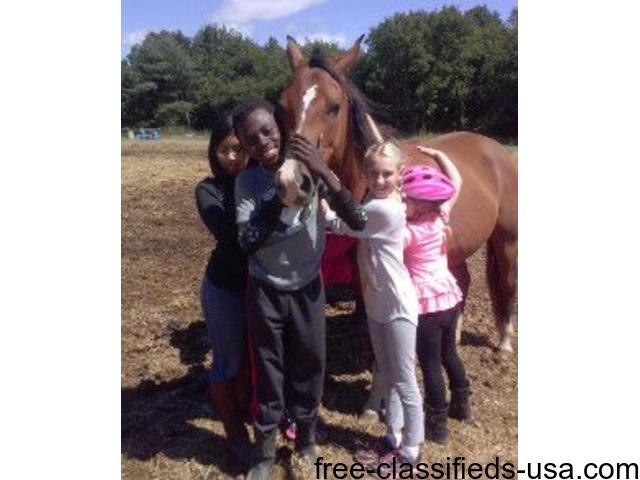 Kid's Summer Horse Clinic!